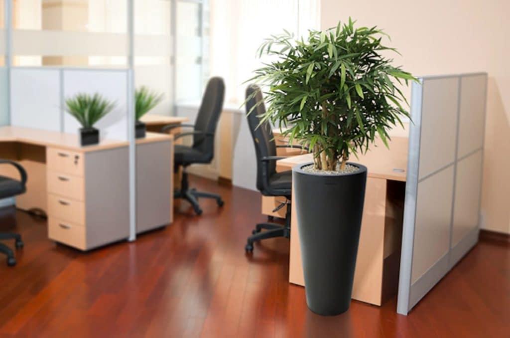 Maxifleur kantoorplanten